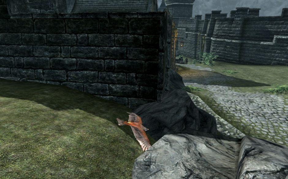 Hawk_Killing_1